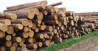 Каждому россиянину полагается 150 кубов леса бесплатно, каждые 25 лет